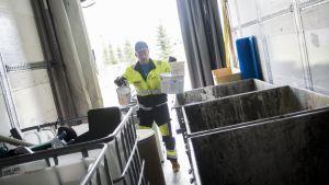 Kuljetus Airaksisen kuljettaja Jari Mikkonen lajittelee vaarallista jätettä auton perässä. Jätekukko on laajentanut vaarallisen jätteen keräystään kuopiolaisilla asuinalueilla.