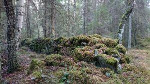 Kiviaitoja Holampin tien varrella. Luonnonperintösäätiö osti Porin Ahlaisissa sijaitsevan alueen vuonna 2019.