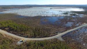Kuvassa näkyy, kuinka Kaunisvaaran kaivoksen rikastushiekkajätettä on pumpattu Tapulivuoman suolle ja metsään. Kuva otettu viime toukokuussa.