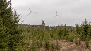 Latamäen tuulipuistossa tuuliturbiinit jauhavat sähköä