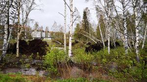 Puita on kaatununut toukokuun lopun myrskyssä Kemissä.