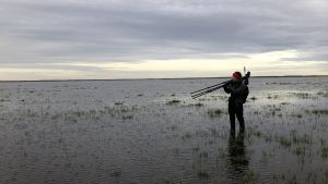 Kahlaajatutkija veden alle jääneellä kahlaajien pesimäniityllä