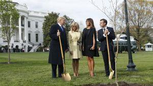 Yhdysvaltain presidentti Donald Trump, Melania Trump sekä Ranskan presidentti Emmanuel Macron ja hänen vaimonsa Brigitte Macronin osallistuvat puun istutukseen 23. huhtikuuta 2018 Valkoisen talon edessä Washingtonissa.