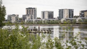 Penttilänrantaa Pielisjoen rannassa.