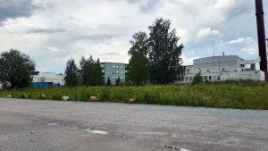 Virastotalon tontti Hämeenlinnassa