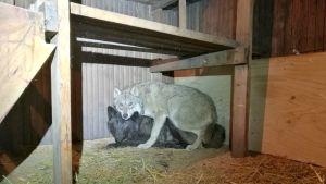 Orimattilasta löydetyt eläimet