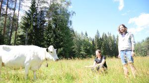 lapinlehmä nuuskii kättä Lammin Evolla