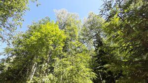 Sähkö- ja puhelinlinjaa metsässä