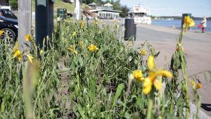 Raekuuron vaurioittamia kukkaistutuksia