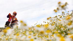 Enduropyöräilijä kukkapellossa