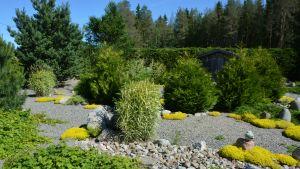 Puutarhan vanhimmassa osassa kasvit ovat jo vehmaita.