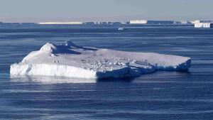 Jäätiköstä irronnut jäälautta Länsi-Antarktiksen rannikolla.