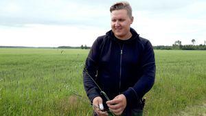 Isokyröläinen Antti Hyppönen kiertää peltojaan etsien hukkakauraa.