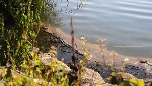Onkilahden jätevesivuoto