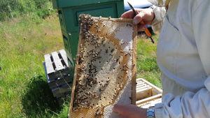 Mehiläinen, hunajasato, mehiläistarhaaja