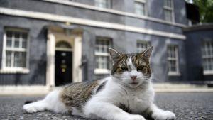 Eräillä ei ole kiire. Larry-kissa lepäili residenssinsä edustalla heinäkuun alkupuolella.