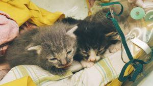 Kissat hoidettavina