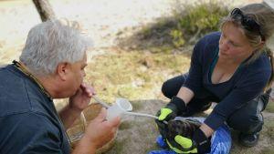 Eläinlääkärit Pekka Sarkanen ja Anu Korpikallio ruokkivat Pihlajavedeltä löytynyttä kuuttia.