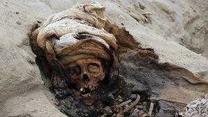 Trujillon kansallisen yliopiston johtava arkeologi uskoo, että lapsiuhreja löydetään arkeologiselta kaivaukselta vielä lisää.