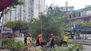 Pelastushenkilöstö raivaa taifuunin aiheuttamia tuhoja. Kadulla maakaa iso kaatunut puu.