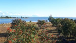 Maisema Selkä-Sarven saaressa Perämerellä.