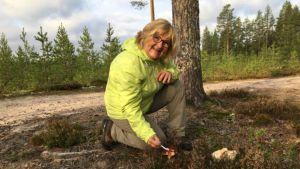 Sienestäjä Tytti Raudaskoski ja männynherkkutatti