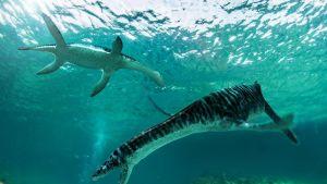 Piirroskuva kahdesta uivasta pitkäkaulaisesta liskosta.