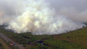 Savu nousee palavasta metsästä Indonesian Kalimantanissa.