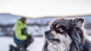 Äijä koira, Eränkävijät, Kilpisjärvi