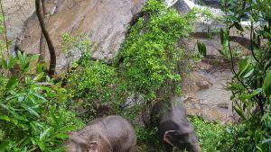 Kaksi norsua pelastui.
