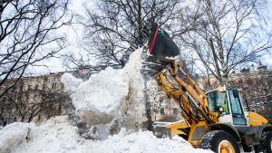 Lumiaura kasaa lunta helsinkiläisessä puistossa. Helsingin kaupunki käyttää vuosittain keskimäärin noin 25 miljoonaa euroa katujen ja puistoraittien talvihoitoon.