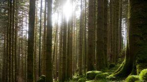 sammaleinen metsä