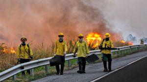 Palomiehet sammuttivat isoa metsäpaloa Pantanalin alueella Brasiliassa 29. lokakuuta 2019.