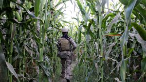 Afganistan turvallisuusjoukkojen upseeri tiedustelukierroksella Taliban-joukkoja vastaan maanantaina 28. lokakuuta.
