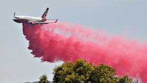 Vaaleanpunaista sammutuskemikaalia pudotetaan lentokoneesta lähellä Tareen kaupunkia Australiassa 12. marraskuuta 2019.