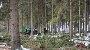Metsäkone metsässä.