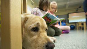 Ruuti-koira kuuntelee, kun oppilaat harjoittelevat lukemista.