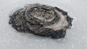Pilkkijä huomasi mustaa ainetta Kolmisoppi-lammella Kuopiossa. Lampi sijaitsee lähellä Vuorilammen Natura-aluetta.