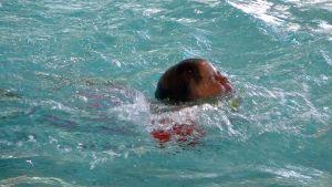 Uimari, uinti, uima-allas