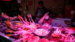 Nainen myi teurastettuja kanoja eteläisessä Guangzhoun kaupungissa helmikuussa.
