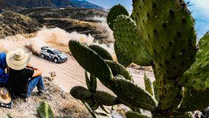Maaliskuun alussa ajettu Meksikon MM-ralli on kauden 2020 viimeisin osakilpailu.