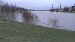 Kokemäenjoki  tulvii Porin Kirjurinluoroon.