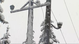 Tykkylunta tarttuneena sähkötolppaan.