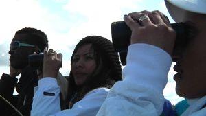 Maahanmuuttajat katselevat vesilintuja Rummelön lintutornilla.