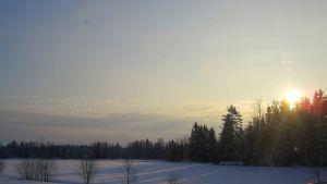 Talviaurinko paistaa lumiselle pellolle puiden läpi
