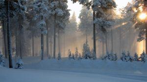 Tuuli puudottaa lumia puista