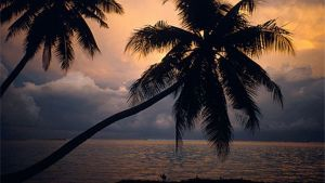 Palmuranta auringonlaskussa.