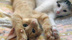 Kissoja sängyllä.