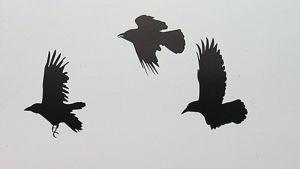 Maalattuja lintuja seinällä.