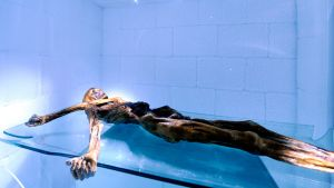 Jäämies Ötzin luonnollisesti muumioitunut ruumis Etelä-Tirolin arkeologisen museon kylmähuoneessa.